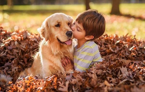 Добрые-породы-собак-Названия-описание-особенности-и-фото-добрых-пород-собак-8