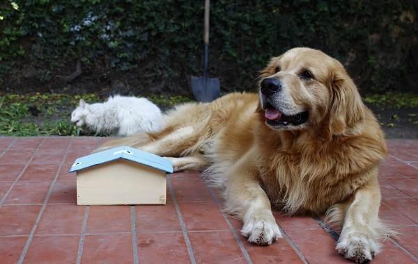 Добрые-породы-собак-Названия-описание-особенности-и-фото-добрых-пород-собак-9