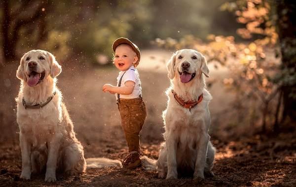 Добрые-породы-собак-Названия-описание-особенности-и-фото-добрых-пород-собак