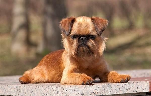 Редкие-породы-собак-Описание-названия-виды-и-фото-редких-пород-собак-7