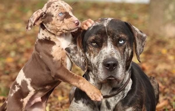 Редкие-породы-собак-Описание-названия-виды-и-фото-редких-пород-собак