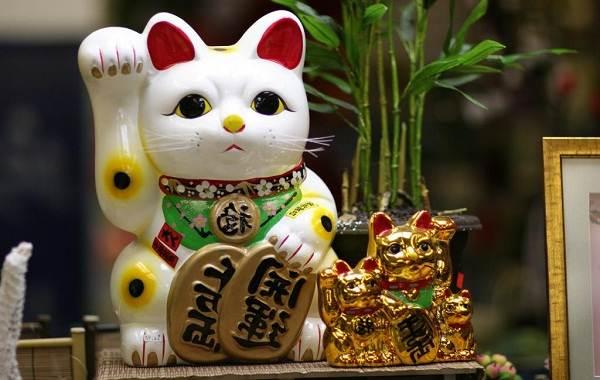 Трехцветная-кошка-Описание-особенности-приметы-и-породы-трёхцветных-кошек-13