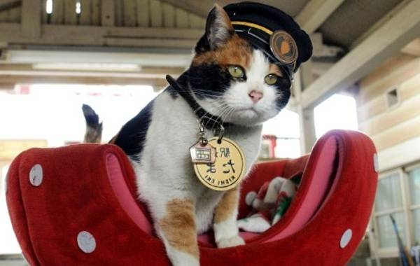 Трехцветная-кошка-Описание-особенности-приметы-и-породы-трёхцветных-кошек-21