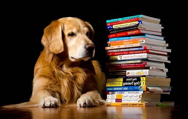 Самые-умные-породы-собак-1