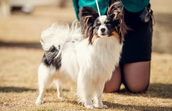 Самые-умные-породы-собак-22