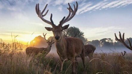 Виды оленей. Описание, особенности, фото и названия видов оленей
