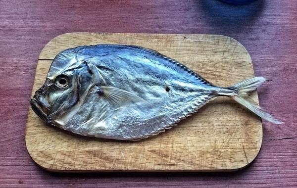 Вомер-рыба-Описание-особенности-среда-обитания-и-фото-рыбы-3