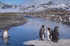 Виды пингвинов, их особенности и среда обитания