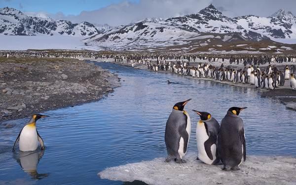 Виды-пингвинов-их-особенности-и-среда-обитания-1