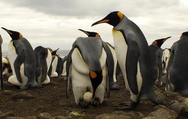 Виды-их-особенности-и-среда-обитания-3