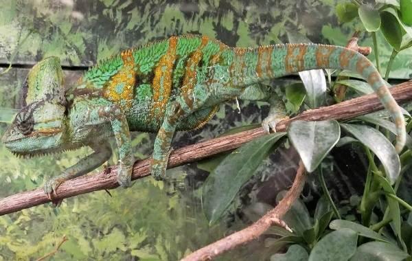 Виды-ящериц-с-названиями-особенностями-и-фото-12