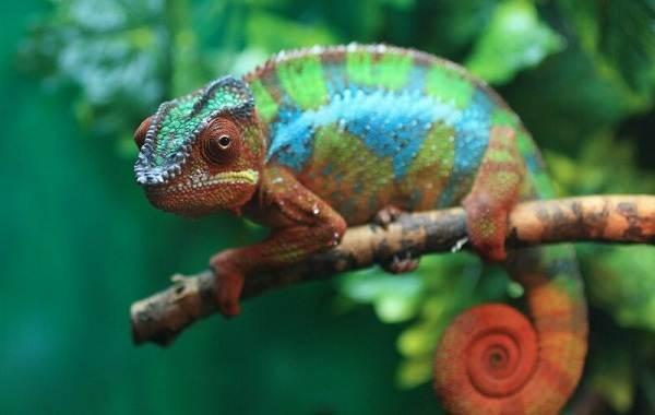 Виды-ящериц-с-названиями-особенностями-и-фото-13