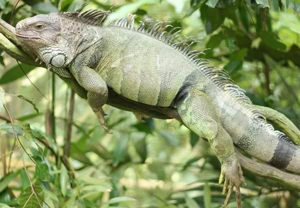 Виды-ящериц-с-названиями-особенностями-и-фото-15