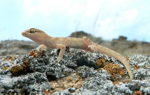Виды-ящериц-с-названиями-особенностями-и-фото-19