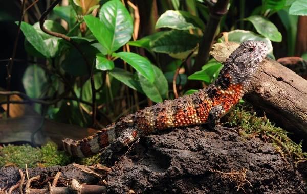Виды-ящериц-с-названиями-особенностями-и-фото-35