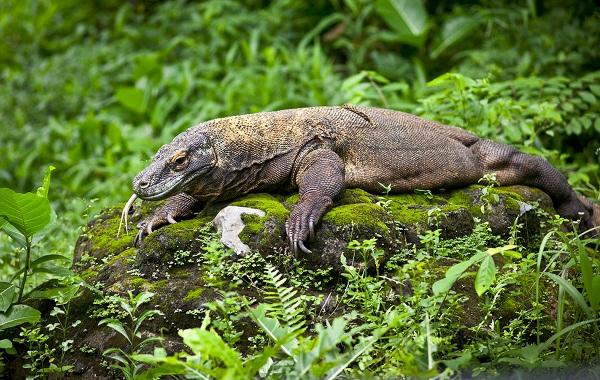 Виды-ящериц-с-названиями-особенностями-и-фото-36