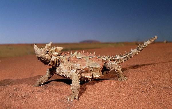 Виды-ящериц-с-названиями-особенностями-и-фото-5