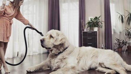 10 пород собак, которых не стоит содержать в квартире