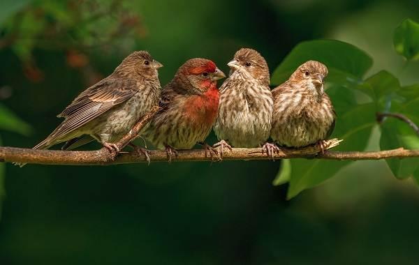 Певчие-птицы-их-названия-особенности-виды-и-фото-1