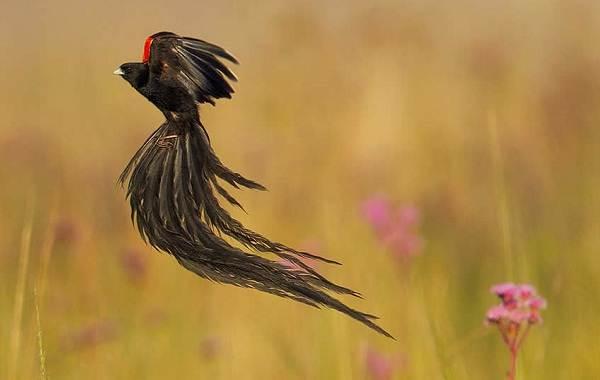 Певчие-птицы-их-названия-особенности-виды-и-фото-53