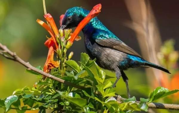 Певчие-птицы-их-названия-особенности-виды-и-фото-59
