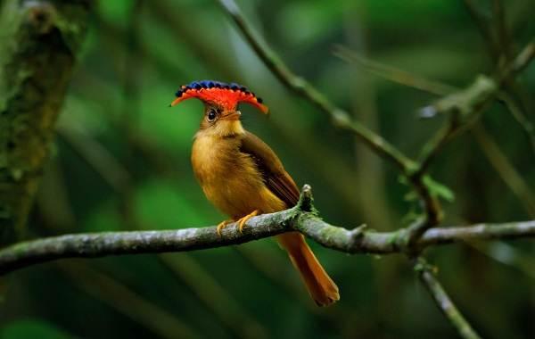 Певчие-птицы-их-названия-особенности-виды-и-фото-7