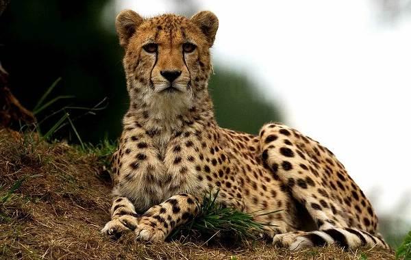 12-самых-быстрых-животных-планеты-12