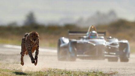 12 самых быстрых животных планеты