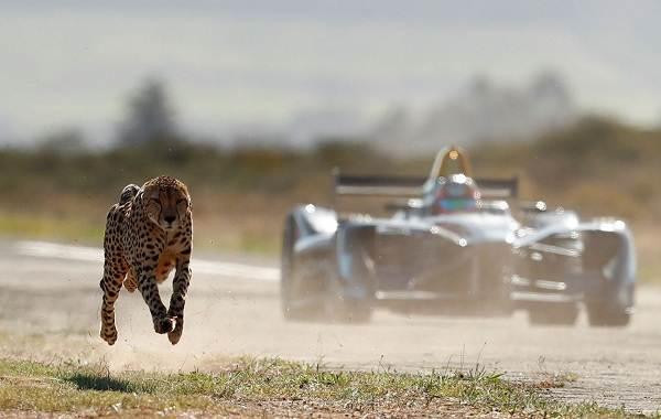 12-самых-быстрых-животных-планеты-19
