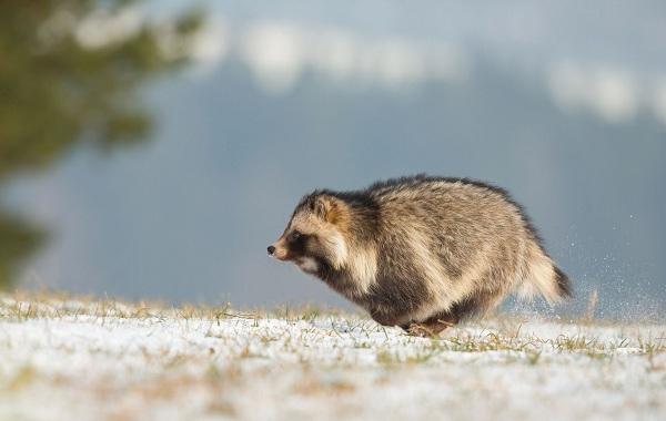 12-самых-быстрых-животных-планеты-21