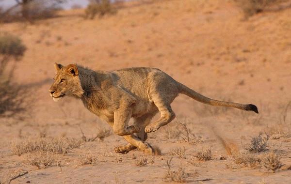 12-самых-быстрых-животных-планеты-23