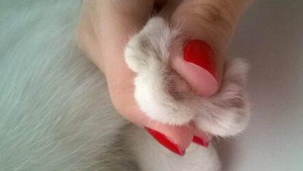 Операция по удалению когтей у кошки: все за и против