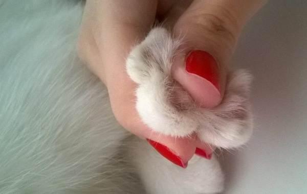 Операция-по-удалению-когтей-у-кошки-все-за-и-против-1