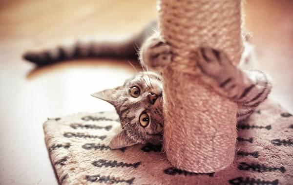 Операция-по-удалению-когтей-у-кошки-все-за-и-против-6