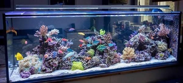 Плюсы-и-минусы-аквариума-дома-и-каких-видов-они-бывают-1