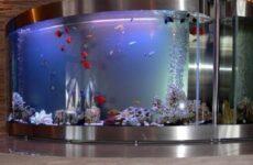 Плюсы и минусы аквариума дома и каких видов они бывают