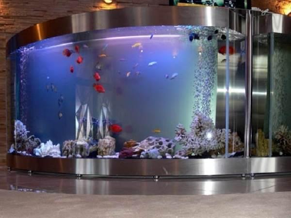 Плюсы-и-минусы-аквариума-дома-и-каких-видов-они-бывают-2