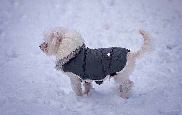 Особенности-виды-плюсы-и-минусы-одежды-для-собак-1