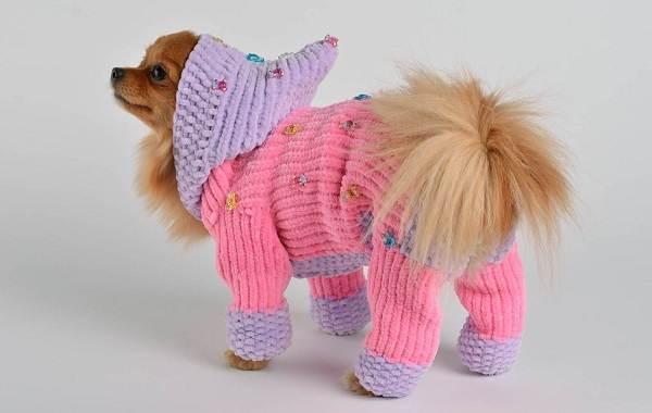 Особенности-виды-плюсы-и-минусы-одежды-для-собак-10