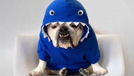 Особенности, виды, плюсы и минусы одежды для собак
