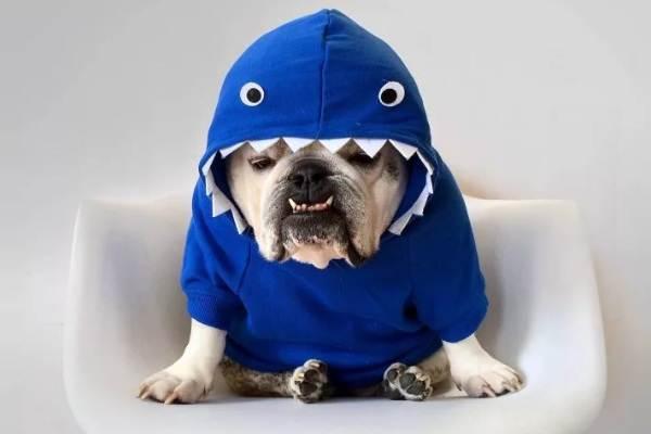 Особенности-виды-плюсы-и-минусы-одежды-для-собак-11