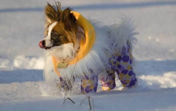 Особенности-виды-плюсы-и-минусы-одежды-для-собак-2