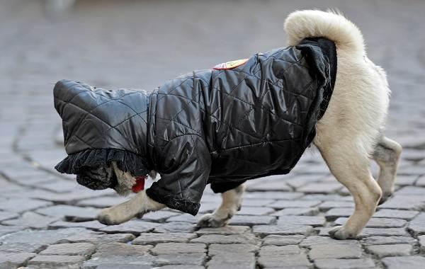 Особенности-виды-плюсы-и-минусы-одежды-для-собак-3