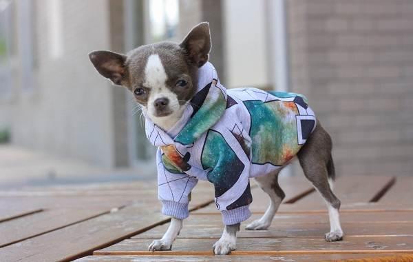 Особенности-виды-плюсы-и-минусы-одежды-для-собак-8