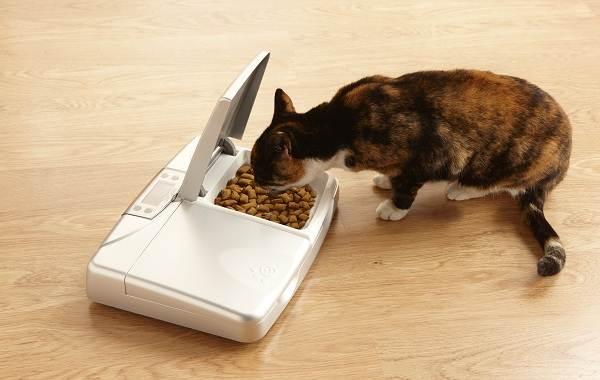 Виды-плюсы-минусы-и-цена-автокормушек-для-кошек-10