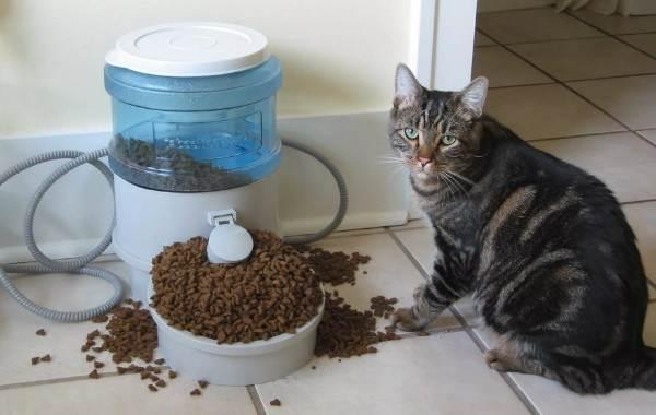 Виды-плюсы-минусы-и-цена-автокормушек-для-кошек-12