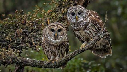 Виды сов, описание, особенности, названия и фото птиц