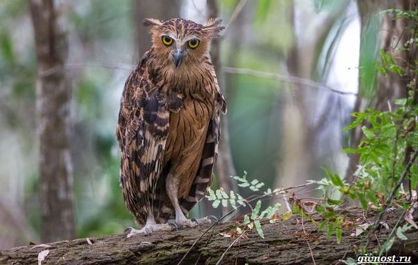Виды-сов-описание-особенности-названия-и-фото-птиц-19