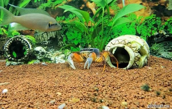 Радужный-краб-Описание-особенности-фото-образ-жизни-и-среда-обитания-5