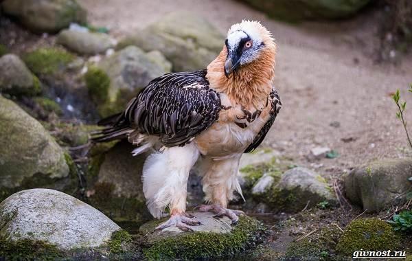 Виды-орлов-их-особенности-названия-образ-жизни-и-фото-птиц-23